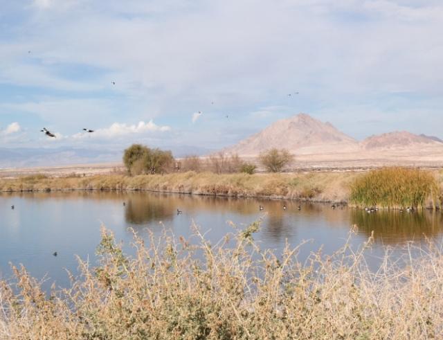 The Henderson, NV Bird Viewing Preserve