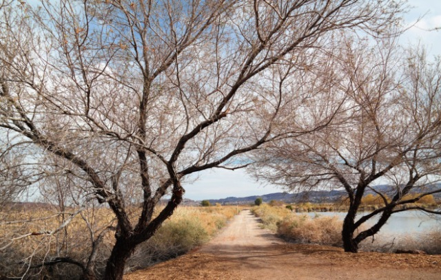 The Henderson, NV Bird Viewing Preserve